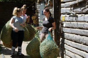 Reiten lernen und Stallarbeiten in Pforzheim